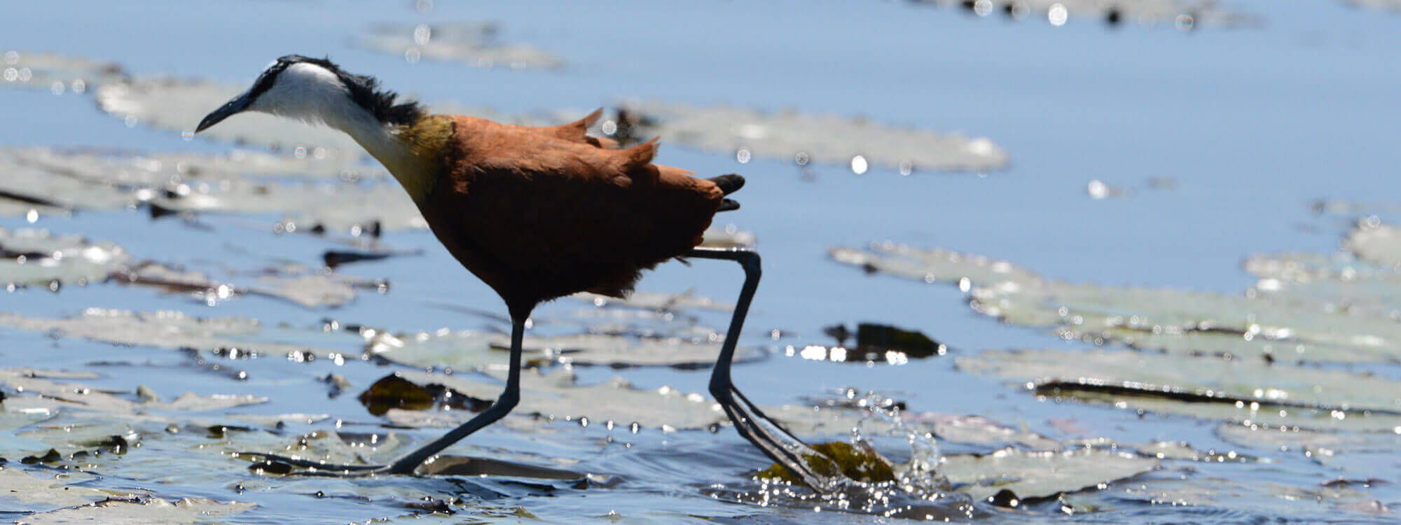 Rettung bedrohter Wildtiere