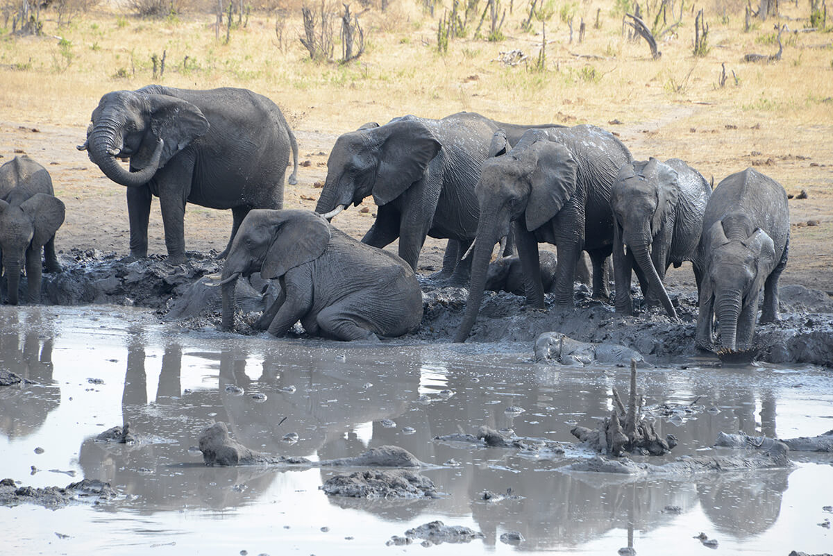 Elefanten im Brunnen