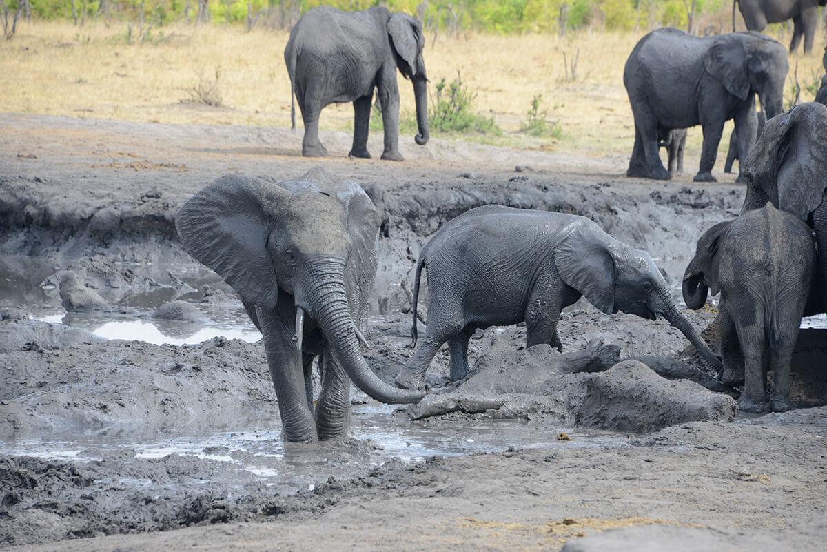 Elefantenherde_54